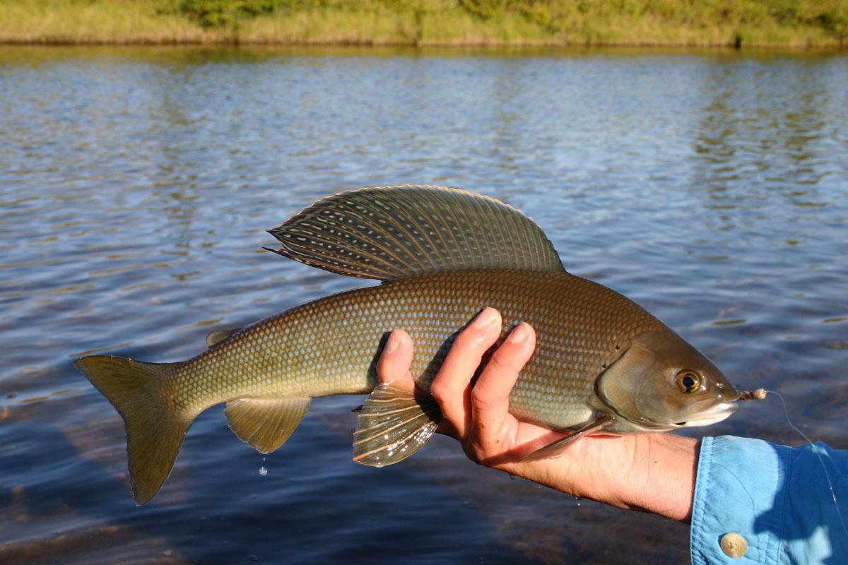 рыбалка на реках россии весной