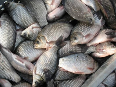 клёв рыбы на завтра в пензе